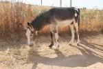Aasipuisto Antequera Donkey Sanctuary