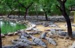 Krokotiilipuisto Crocodile Park