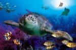 Akvaariopuisto Sea Life Center