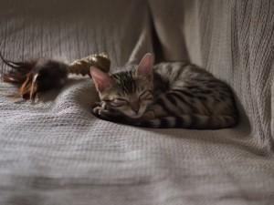 esp_pikkuotus_nukkuu